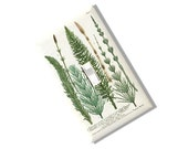 Equisetum Pratense Longissimis Light Switch Cover Outlet 1700s art repo print  Kitchen Bed room Home Decor  Belgium