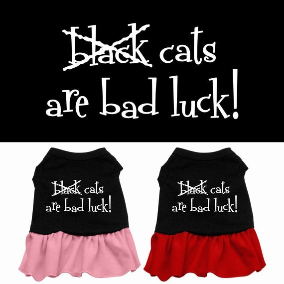 Halloween dog dress black cats are bad luck by dirtroaddog on etsy