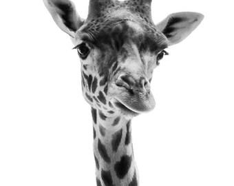 Animal Photography - Giraffe Photo Black and White, 24x36 20x30 16x20 8x10 5x7 fine art wall decor, nursery wall art, grey animal portrait