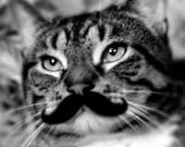 """Stache Kitteh / 8x10 inch art print / mustache cat / kids room art / kitty cat nursery / mancave art / funny cat decor // """"dapper mustache"""""""