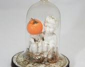 Reserved for Theresa. Pumpkin Pals. Antique German Bisque Pumpkin Figurine - Miniature Glass Cloche Display OOAK