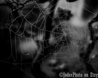 Fine Art Photography 'Web in Front' Gothic dark moody black and white Photograph Print 7x5, 8x10 or 20x16 Wall Art Home Decor