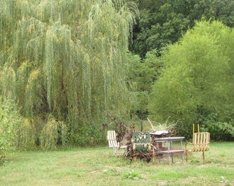 Metal chairs Photo, Weeping Willow Tree Photo, Fire Pit Photo, Cookout, Outdoor camping Photo, Still Life