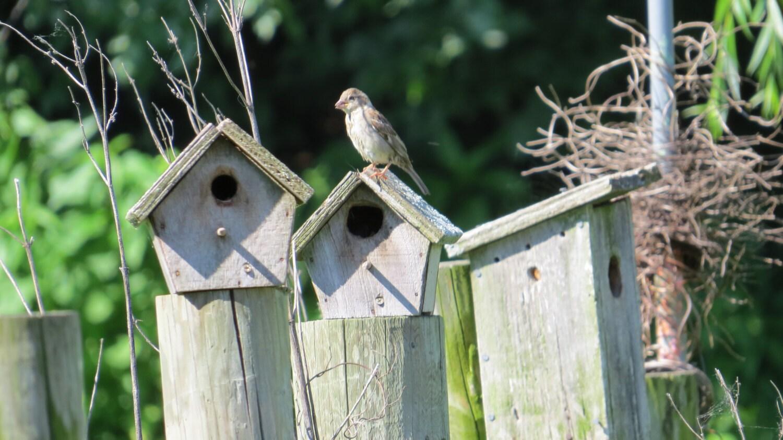 Birdhouse Bird Photo Sparrow Photo Rustic Birdhouses