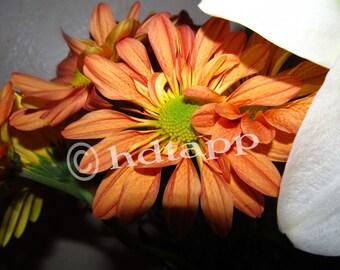 Orange Flower Desktop Wallpaper - Instant Download