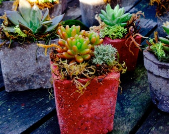 Tiny/Small Square or Round Hypertufa Planter