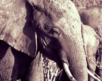 Kenya Photography - Kenya print - Safari Print - Elephant Print - Elephant Photo - Elephant Art - Black and White Print - Wall Art - Decor