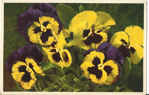 Pansy - Thor E. Gyger, Adelboden, Switzerland - ca. 1940 Vintage Unused Botanical Postcard