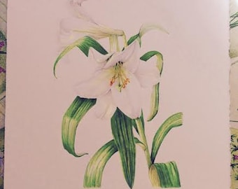 "Original Pencil Drawing 'MADONNA LILLY' 9""x12"" Botanical"