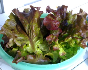Red Romaine Lettuce Seeds- Heirloom