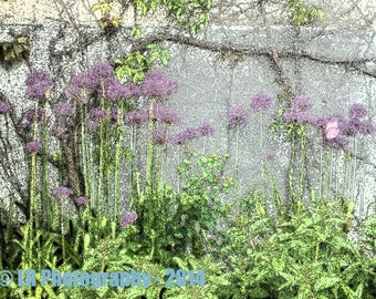 Fine art photograph of purple flowers attached to a grey stone wall surrounded by large green leaves and shrubs