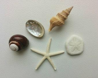 Seashell Fridge Magnets, Shell & Starfish Magnet Set, Beach Decor Fridge Magnets - 5 PC Magnets