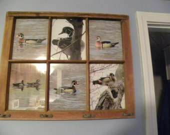 photos of wood ducks set in old window