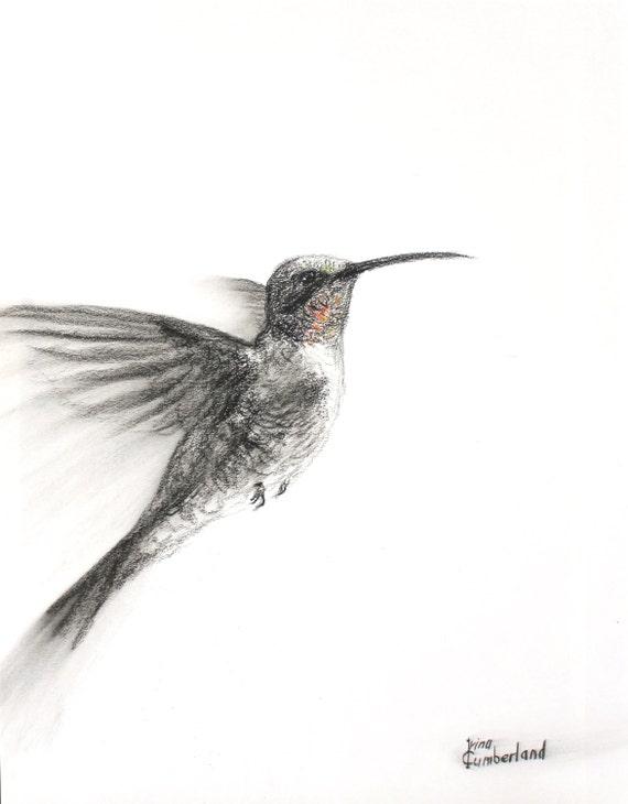 original dessin colibri 11 x 14 fusain sur par imaginefreedomart. Black Bedroom Furniture Sets. Home Design Ideas