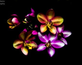 Flowers - Multicolored Ground Orchids