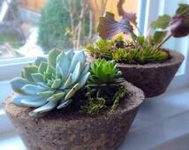 Hypertufa indoor outdoor succulent planter pot - set of 2