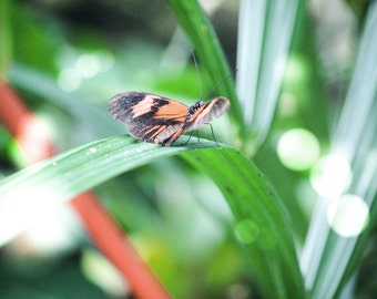 Nature Photography, Nature, Butterfly, Butterfly Conservatory, Colourful, Orange and Green,