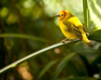 Nature Photography, Color Print, Bird Photograph, Fine Art Print