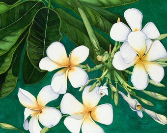 Watercolor painting...HEAVEN SCENT...plumeria...giclee