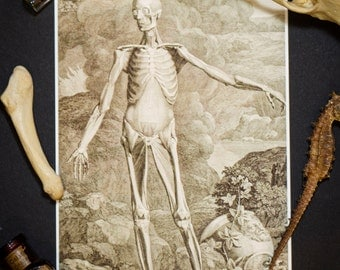 Human Muscle Structure Anatomy Illustration: Vintage 5X7 Print