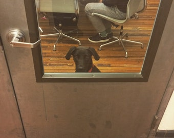 Office Dog Photo 1