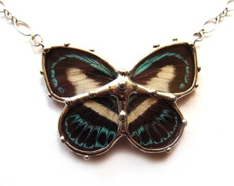 Real Butterfly Necklace - Cute Black and White and Blue
