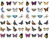 Butterfly Digital Clip Art Collage Sheet - 48 Colorful Butterfly Images Assorted Sizes Jewelry, Magnets, Craft Projects, Scrapbooking