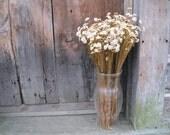 MARGARITA DRiED FLOWER Bunches Daisy