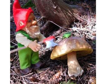 Photographic print Gnome Series #5