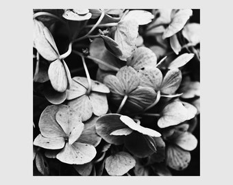Moody Flower Photo, Hydrangea Photo, Macro Flower Photo, Black and White Art, Dramatic Floral Art, Modern Wall Decor, Floral Wall Art