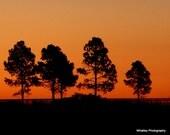 Texas sunrise country landscape Autumn decor Thanksgiving art