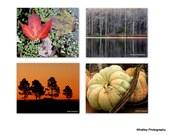 fall decor set, fall print, autumn print, photo set, birch tree photo, pumpkin photo, leaf photo, sunrise photo, rustic decor, kitchen art