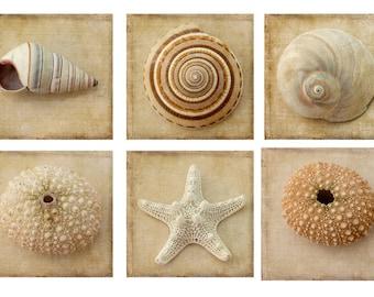 Six Seashell Print Set, Sea Shell Home Decor, Nautical Print Set, Sepia Photography, Beach Decor, Starfish, Sea Urchin