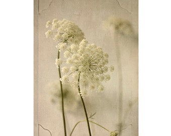 Botanical Art,  Queen Annes Lace Print, Sepia Photography, Cottage Chic Decor, Flower Photography