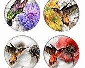 Closeup Hummingbirds and Flowers Magnets or Pinback Buttons or Flatback Medallions Set of 4