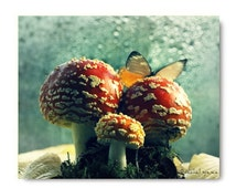 Amanita Mushroom Butterfly On Amanita Red Mushroom Mycology Woodland Print Forest Scene Woodland Finds