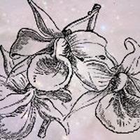 threepurpleorchids