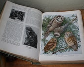 BIRDS OF AMERICA Vintage green linen hard cover book with hundreds of birds