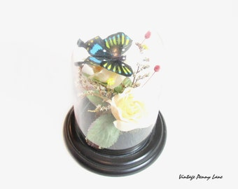 Silk Flower Display Dome, Feather Butterfly