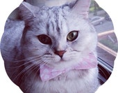 Bow Tie Cat Collar >> Valentines Day { 11 Options } Chariots Afire Pet Costume Kitten Collar Valentine's Day Accessory Hearts Pink Red