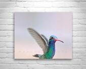 Hummingbird Art, Bird Photography, Pastel Art, In Flight, Pink Art, Cute Animals, Bird Art, Wildlife Photography, MurrayBolesta