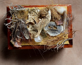 Pocket Forest - cedar wood box with prairie dog jawbone, pheasant feathers, moss and other natural items