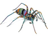 South African Spider Illustration