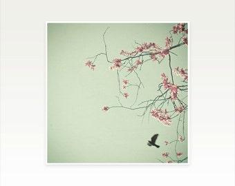 Bird Photography, Flower Photograph, Blossom Tree, Feminine Bedroom Art, Spring, Floral Wall Art, Mint, Pink - Free as a Bird