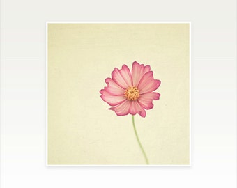 Nature Photography, Cosmos Flower, Minimalist Art, Summer Wall Art, Floral, Simple, Dark Pink and Cream - Stay the Same