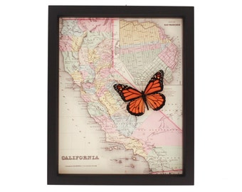 Framed Map of California with real framed Monarch Butterfly Display