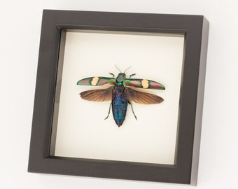 Framed Beetle Display Wood Boring Jewel Insect Art