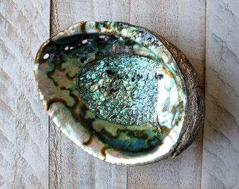 Abalone Shell Bowl
