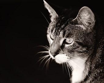 Black and white Photography monochromatic animal photograph cat kitty cute dark dramatic children kids art fur whiskers home decor wall art
