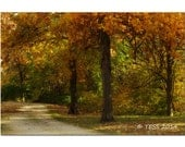 Autumn Trees Photography Print - Fall Photography -  Woodland Photography - Landscape